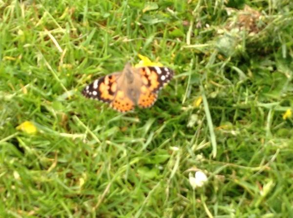 Releasing Butterflies with P7